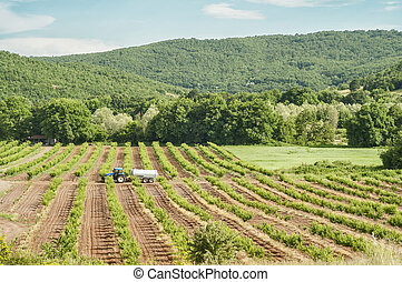 Green agriculture fields