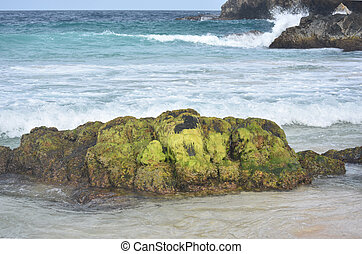Green Algae Covered Rock on a Beach in Aruba - Large green...