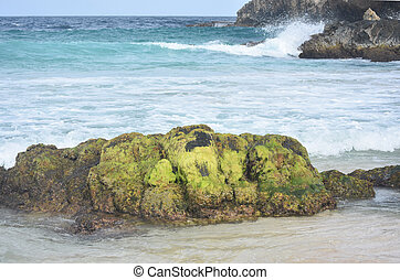 Green Algae Covering a Rock Formation on a Beach in Aruba -...