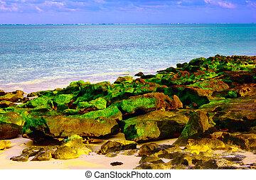 green algae on rock by the sea - rock covered by green algae...