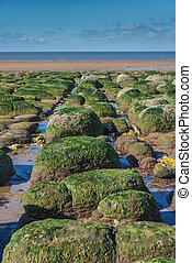 Green algae on rocks by sea at low tide