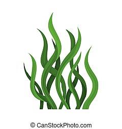 Green algae. Vector illustration on white background.