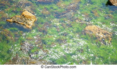Green algae water rays - Underwater landscape Green algae....