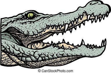 green alligator head