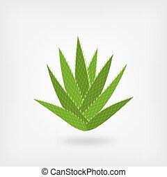 green aloe vera. vector illustration - eps 10