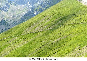 Green alp in Tatra Mountains, Poland.