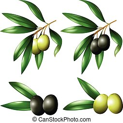 Green and black olives on branch