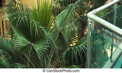Green and bright palm leaves in Sunny summer day. the view...