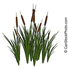 Green and Brown Cattails on a white background