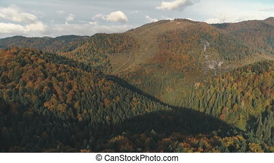 green and brown dense forests cover hills in autumn - green...