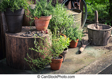 Green and ecological herbs on the old porch