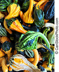 Green and orange decorative gourds