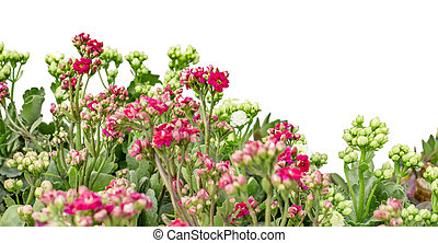 Green and pink flowers