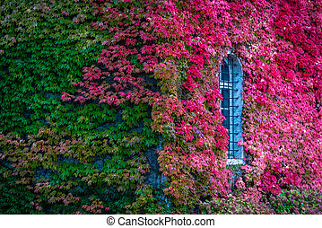 Green and red leaves on a wall
