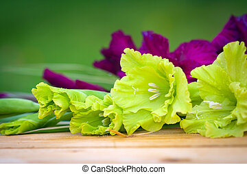 Green and violet gladioli flowers on blurred background