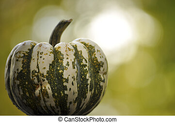 Green and white gourd