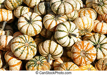 Green and White Gourds 2