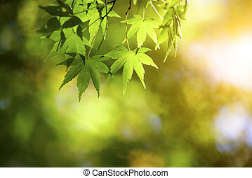 green and yellow autumn leaves with sunlight background