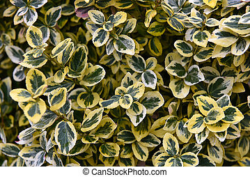 Green and yellow leaves texture, abstract background