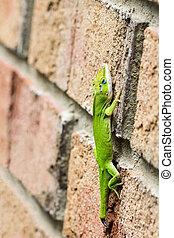 Green anole lizard on brick wall
