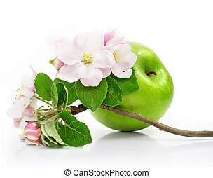 green apple fruit isolated with pink flowers on branch