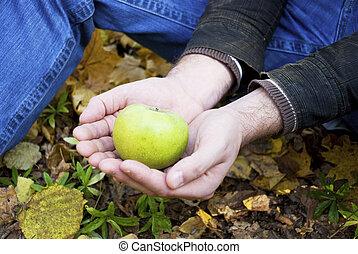 green apple in the hands of men