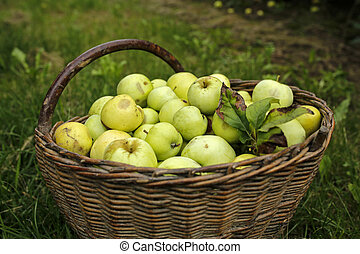 green apples in a basket on grass