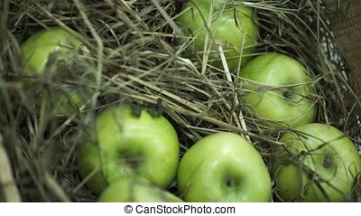 Green apples in the hay. Basket with apples lying in the hay. Juicy ripe apples and pears lay chest harvest. The chest stands on a beautiful green lawn . Composition from apples and hay.