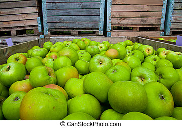 Green apples in wooden boxes