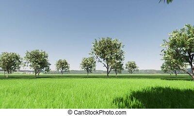 Green apricot garden Closeup on green backdrop. Nature landscape 4k