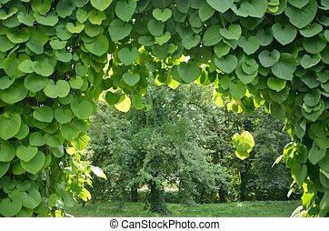 Arch of plants in the Botanic garden Kyiv