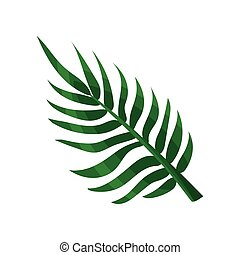 Green areca palm leaf vector Illustration