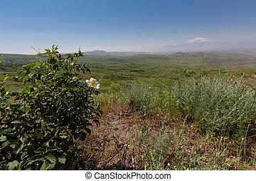 green Armenian valley