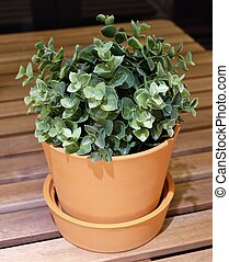 Green Artificial Plants in A Pottery Flower Pot