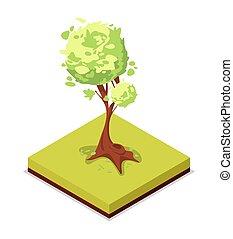 Green ash tree isometric 3D icon