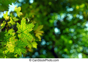 green autumn leaves