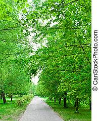 Green avenue in park