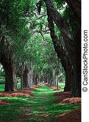 Green Avenue of Oaks