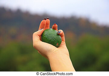 Green avocado in the hands of a woman
