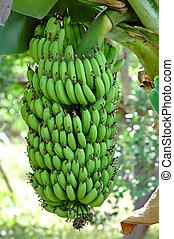 green babana