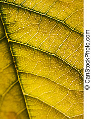 Green background - In botany, a leaf is an above-ground...
