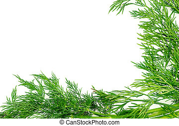 Green background texture with fresh organic dill herb with ...