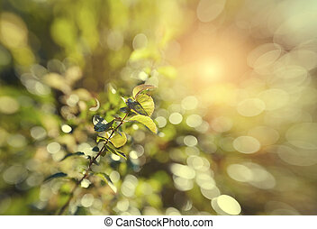 Green background with bokeh with branches