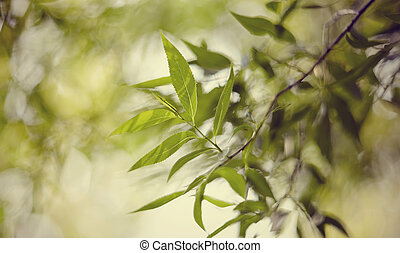 Green background with bokeh with branches of willow.