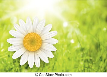 Green Background with chamomile flo