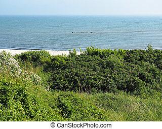 Green Baltic Sea coast