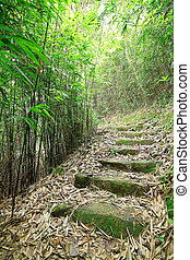 Green Bamboo Forest -- a path leads through a lush bamboo forest