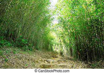 Green Bamboo Forest -- a path leads through a lush bamboo forest in Taiwan