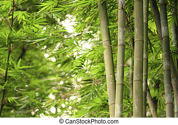green bamboo forest with ray of lights