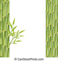 bamboo frame isolated